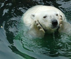 animal, water, and cute image