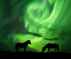 aurora borealis, horses, and iceland image