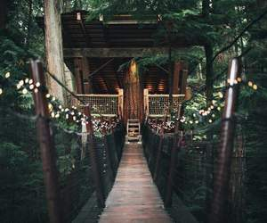 forest, lights, and bridge image