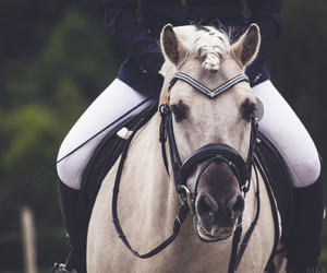 dressage, pferd, and horse image