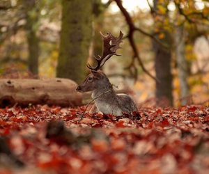autumn, deer, and animal image