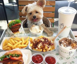 dog, food, and cute image