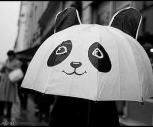 panda, umbrella, and rain image