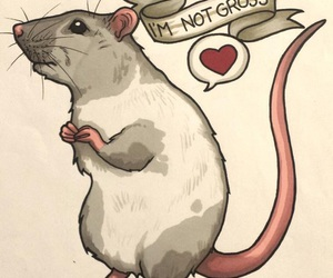 rat and cute image
