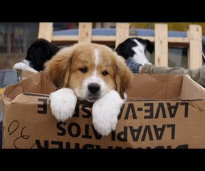 dogs, puppy, and a dog's purpose image