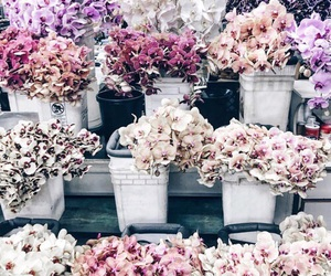flowers, pink, and pastel image