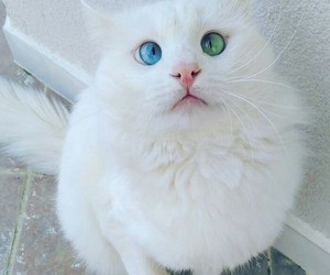 cat, eyes, and kitten image