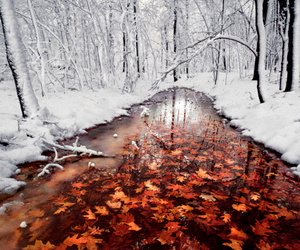 winter, snow, and autumn image
