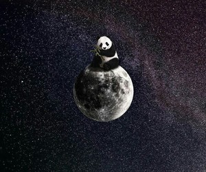 moon, panda, and space image