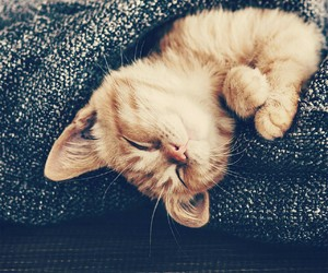 cat, small, and cute image