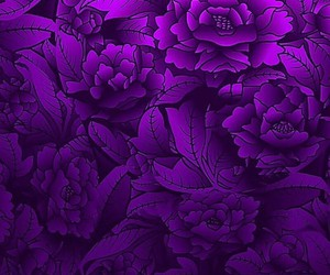 black, nature, and purple image