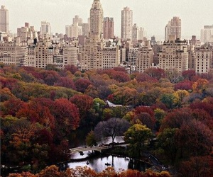 new york, city, and autumn image