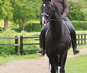 black, equestrian, and horse image