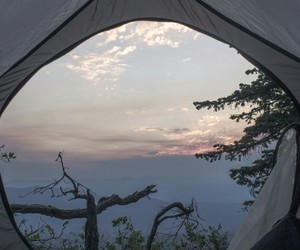 camp, tree, and alternative image