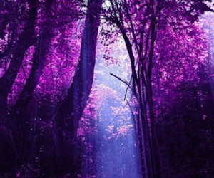 purple, forest, and tree image