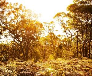 australia, nature, and sun image