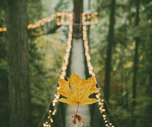 autumn, nature, and november image