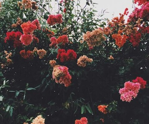 flowers, hipster, and pink image