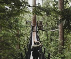 forest, adventure, and bridge image