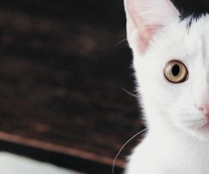 big eyes, cat eyes, and indie image