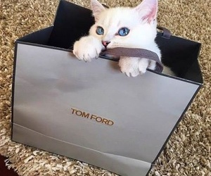 cat, cute, and tom ford image