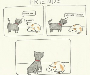 cat, cute, and friends image
