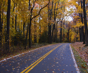 road, fall, and leaves image
