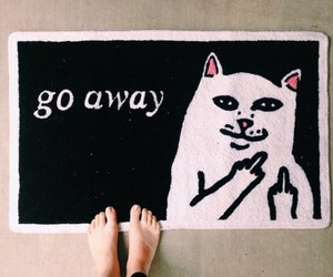 cat, go away, and funny image