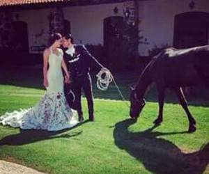 horse, marriage, and beautiful image