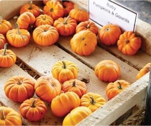 pumpkin, orange, and autumn image