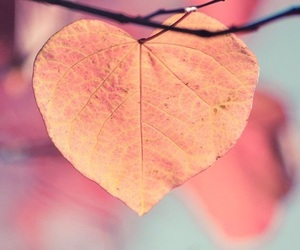 heart, autumn, and love image
