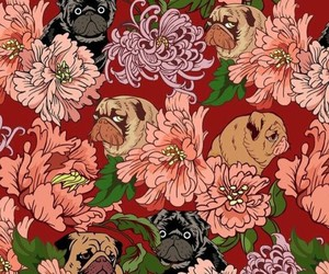 animal, background, and color image