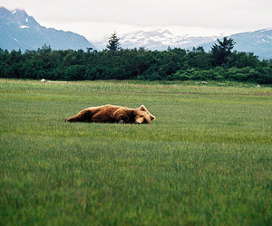 bear, grass, and mountains image