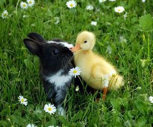 bunny, duck, and animal image