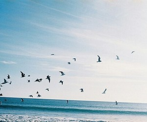 birds, sea, and nature image