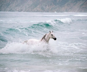 horse, ocean, and animal image