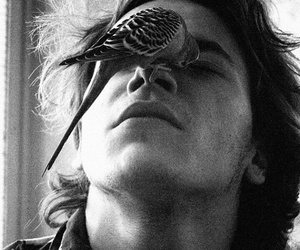 river phoenix, bird, and black and white image