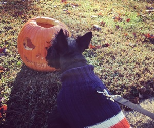 dog, fall, and Terrier image