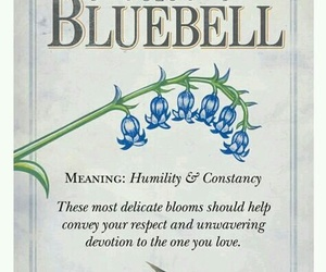 bluebell, delicate, and devotion image