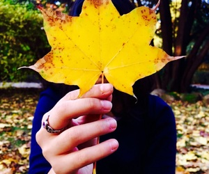 autumn, leaf, and yellow image