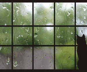 animals, cat, and rain image