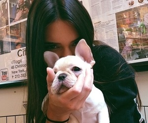 dog, kendall jenner, and model image