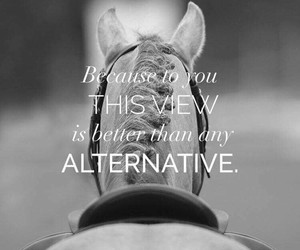 equestrian, quotes, and equine image