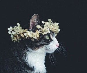 fashion, kitty, and cute image