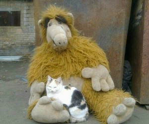 alf, cat, and funny image