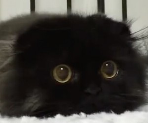 black, fluffy, and cute image