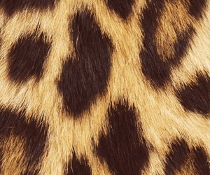 leopard, fur, and pattern image