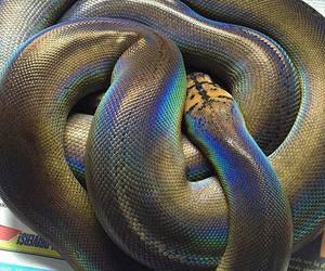 snake and holographic image