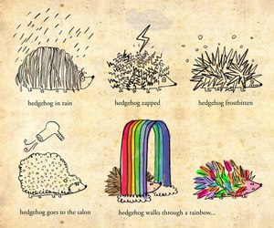 hedgehog, rainbow, and animal image