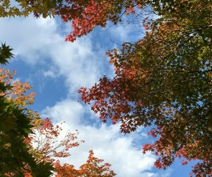 blue, fall, and clound image